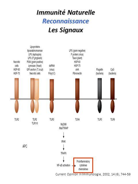 Implication des cytokines A toutes les étapes de la réponse immune Effecteur Maturation BLc PL(IL-10, IL-6) Commutation B B (IL-4, IL-13) Activation T Lc(TNF, IFN) Maturation BLc PL(IL-10, IL-6) Commutation B B (IL-4, IL-13) Activation T Lc(TNF, IFN) Mobilisation (Cytokines, Chimiokines ) Expression des «adhésines» (TNF) Adhérence / Diapédèse Mobilisation (Cytokines, Chimiokines ) Expression des «adhésines» (TNF) Adhérence / Diapédèse Domiciliation CPA Présentation antigénique (INF HLA II ) Présentation antigénique (INF HLA II ) Inducteur Prolifération T G1 S (IL-2) Prolifération T G1 S (IL-2)