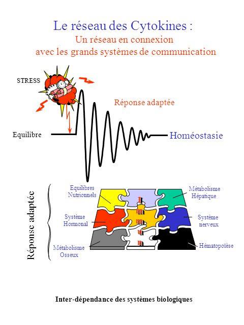 Le réseau des Cytokines : Un réseau en connexion avec les grands systèmes de communication Hématopoïèse Métabolisme Hépatique Système nerveux Système