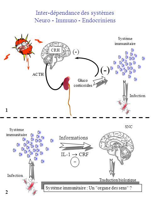 Inter-dépendance des systèmes Neuro - Immuno - Endocriniens Glucocorticoïdes Système immunitaire (-) Infection ACTH CRH (-) 1 SNC Informations Infecti