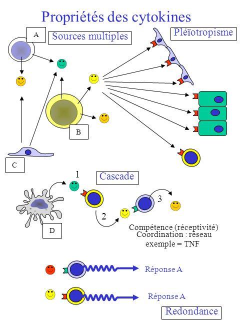 Propriétés des cytokines Pléïotropisme Réponse A Redondance A B C 1 2 3 Cascade Compétence (réceptivité) Coordination : réseau exemple = TNF D Sources