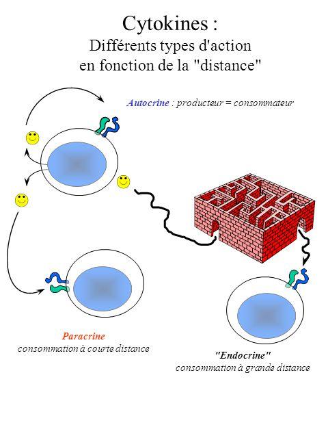 Cytokines : Différents types d'action en fonction de la