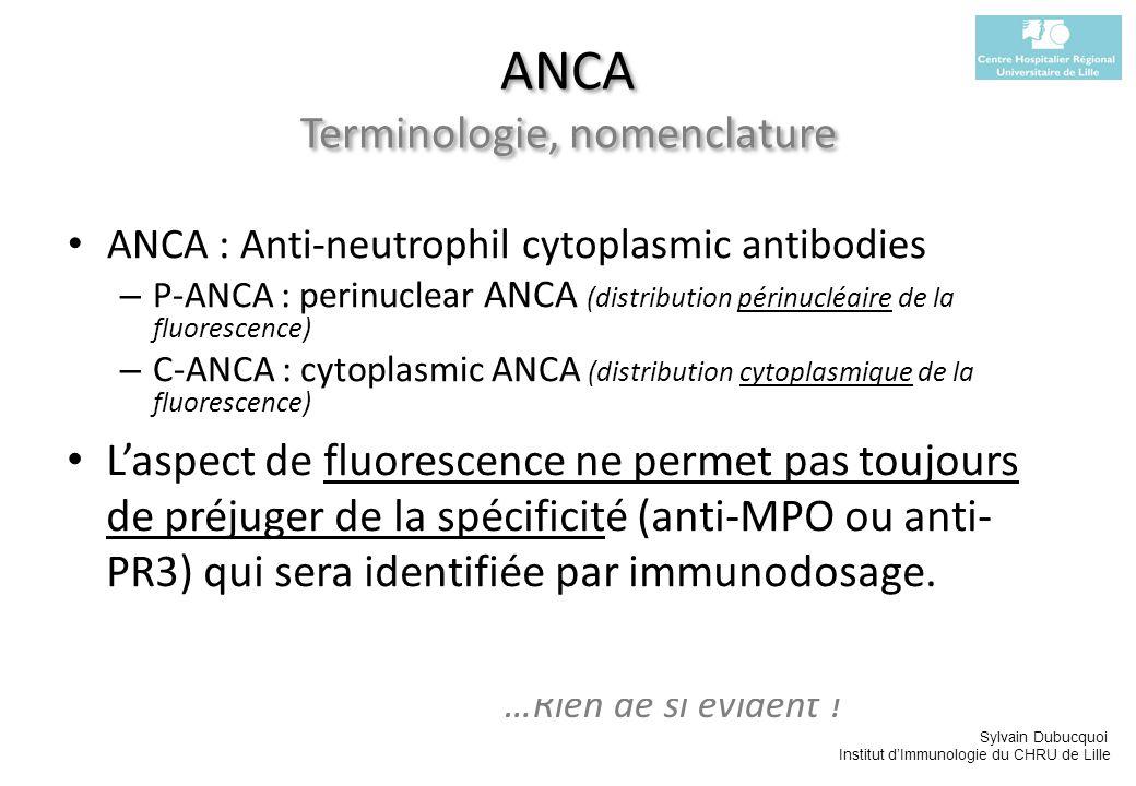 Sylvain Dubucquoi Institut dImmunologie du CHRU de Lille ANCA : Anti-neutrophil cytoplasmic antibodies – P-ANCA : perinuclear ANCA (distribution périn