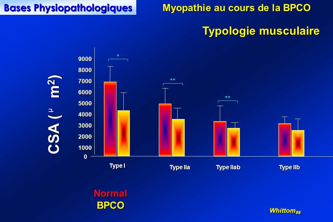 0 1000 2000 3000 4000 5000 6000 7000 8000 9000 Type I Type IIa Type IIab Type IIb CSA ( m 2 ) µ ** * NormalBPCO Whittom 98 Typologie musculaire Myopathie au cours de la BPCO Bases Physiopathologiques