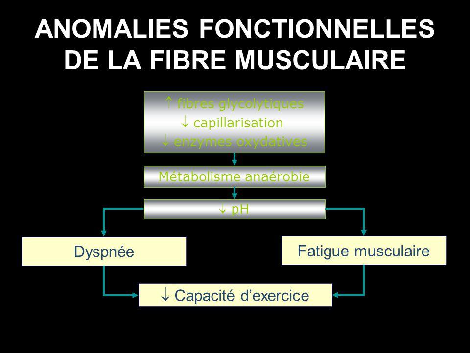 ANOMALIES FONCTIONNELLES DE LA FIBRE MUSCULAIRE fibres glycolytiques capillarisation enzymes oxydatives Métabolisme anaérobie pH Dyspnée Fatigue muscu