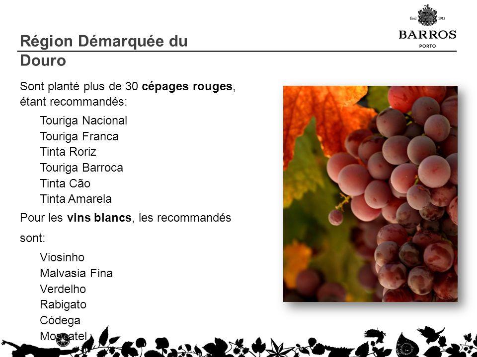 Sont planté plus de 30 cépages rouges, étant recommandés: Touriga Nacional Touriga Franca Tinta Roriz Touriga Barroca Tinta Cão Tinta Amarela Pour les