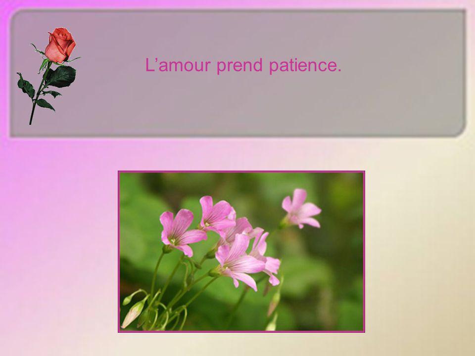 Lamour prend patience.