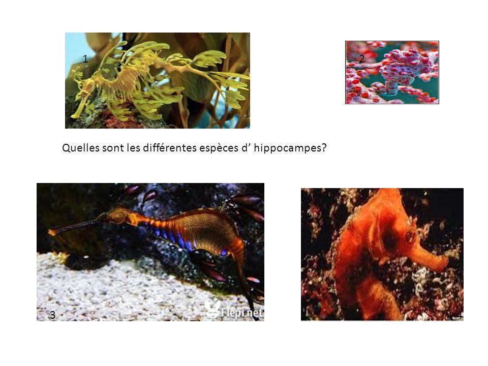 Quelles sont les différentes espèces d hippocampes? 12 34