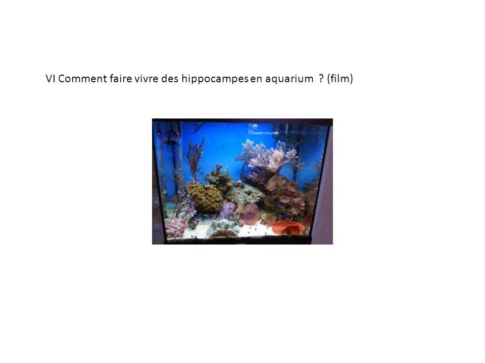VI Comment faire vivre des hippocampes en aquarium ? (film)