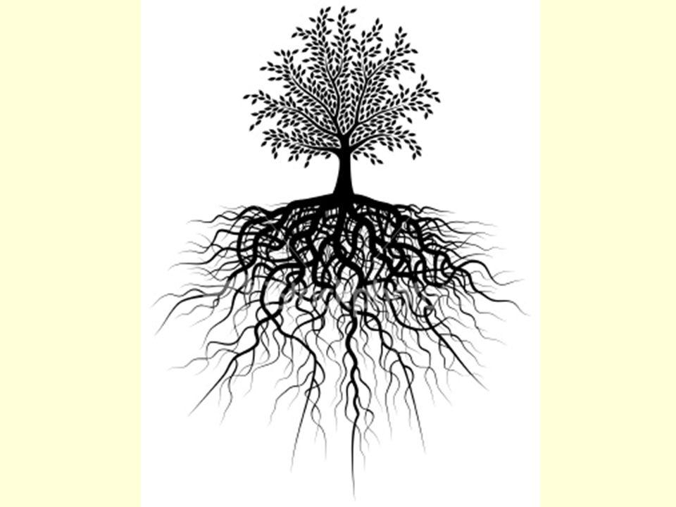 Un arbre et ses racines