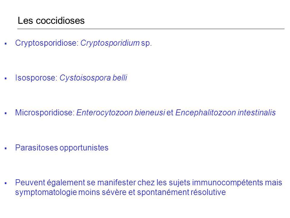 Cryptosporidiose: Cryptosporidium sp. Isosporose: Cystoisospora belli Microsporidiose: Enterocytozoon bieneusi et Encephalitozoon intestinalis Parasit
