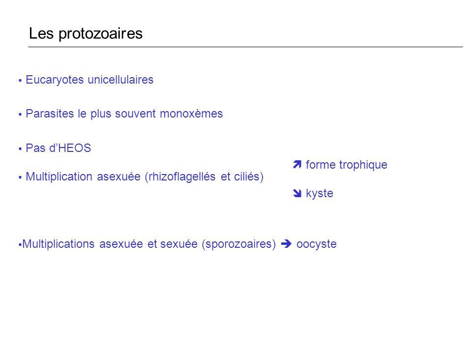 Eucaryotes unicellulaires Parasites le plus souvent monoxèmes Pas dHEOS forme trophique Multiplication asexuée (rhizoflagellés et ciliés) kyste Multip