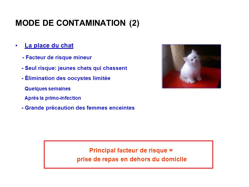 MODE DE CONTAMINATION (2) La place du chat - Facteur de risque mineur - Seul risque: jeunes chats qui chassent - Élimination des oocystes limitée Quel