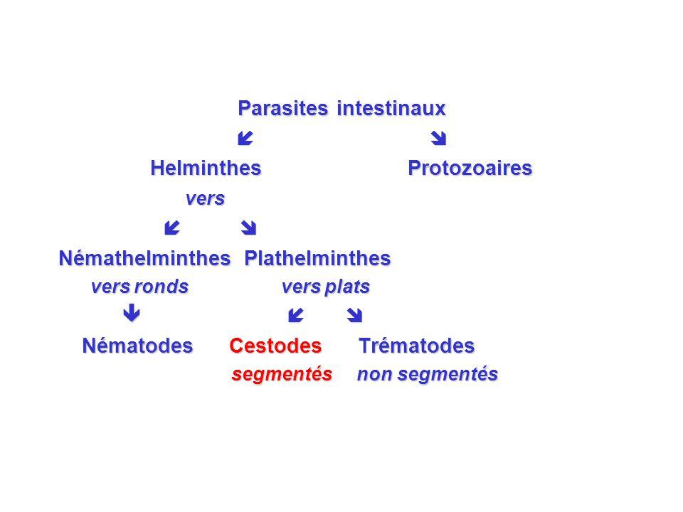 Parasites intestinaux Helminthes Protozoaires vers vers Némathelminthes Plathelminthes vers ronds vers plats vers ronds vers plats Nématodes Cestodes Trématodes Nématodes Cestodes Trématodes segmentés non segmentés segmentés non segmentés
