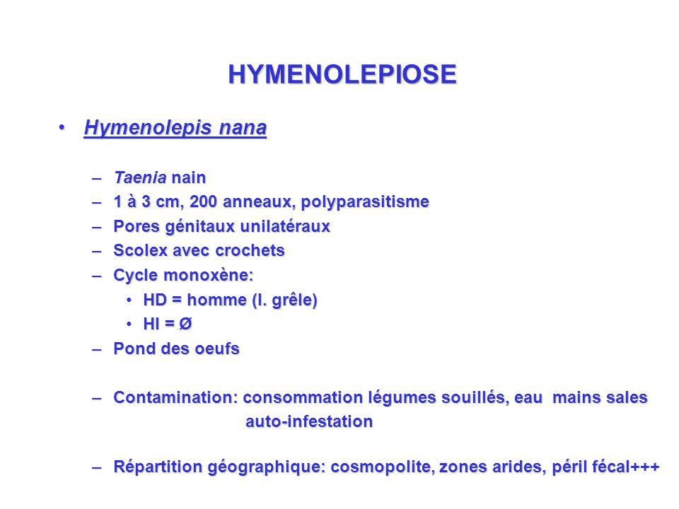 HYMENOLEPIOSE Hymenolepis nanaHymenolepis nana –Taenia nain –1 à 3 cm, 200 anneaux, polyparasitisme –Pores génitaux unilatéraux –Scolex avec crochets –Cycle monoxène: HD = homme (I.