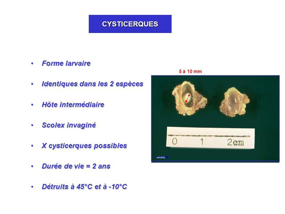 CYSTICERQUES Forme larvaireForme larvaire Identiques dans les 2 espècesIdentiques dans les 2 espèces Hôte intermédiaireHôte intermédiaire Scolex invaginéScolex invaginé X cysticerques possiblesX cysticerques possibles Durée de vie = 2 ansDurée de vie = 2 ans Détruits à 45°C et à -10°CDétruits à 45°C et à -10°C 5 à 10 mm