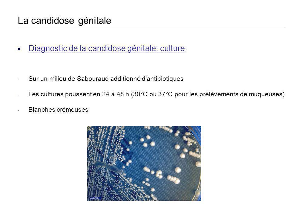 Diagnostic de la candidose génitale: culture - Sur un milieu de Sabouraud additionné d'antibiotiques - Les cultures poussent en 24 à 48 h (30°C ou 37°