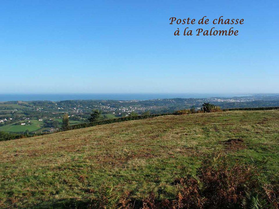 Poste de chasse à la Palombe