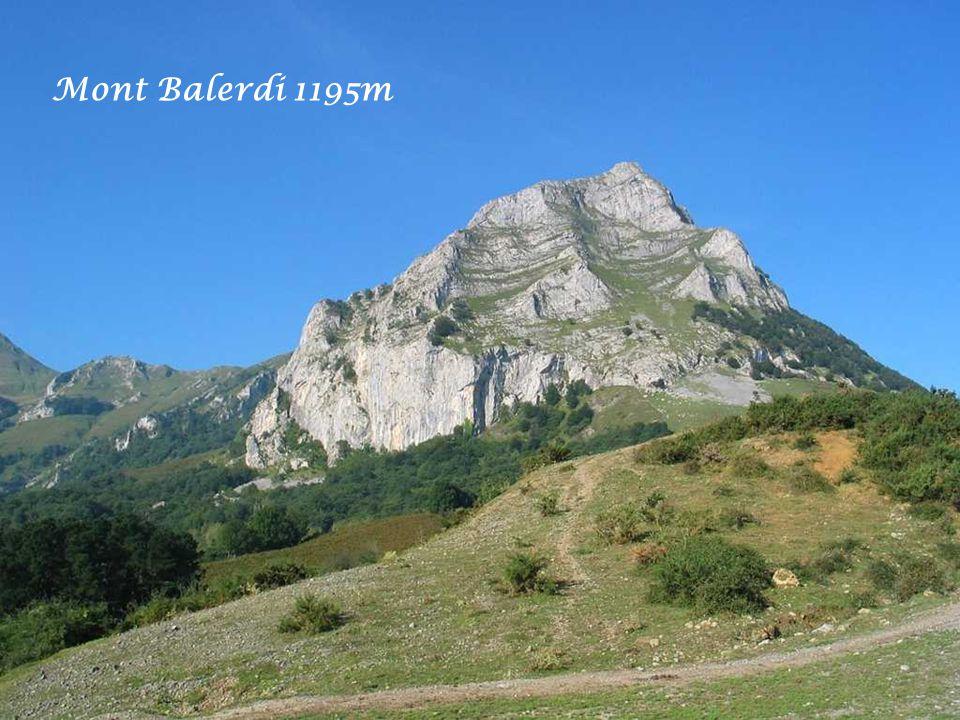 Le nom Balerdi est originaire du village de Betelu en Navarre, situé au pied du Mont Balerdi à 20Km de Tolosa.