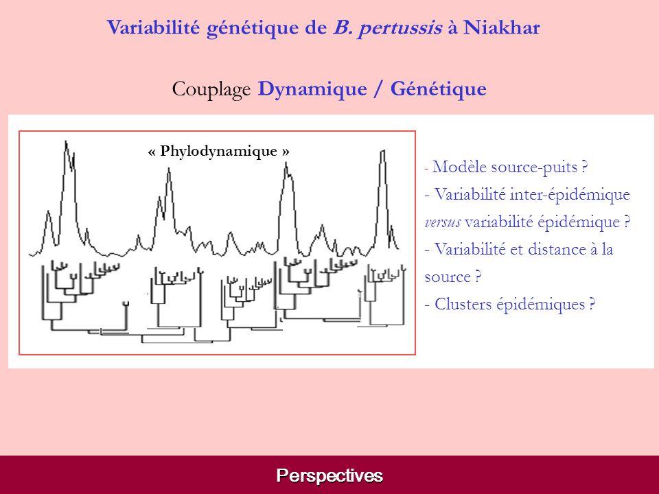 Perspectives Variabilité génétique de B. pertussis à Niakhar - cycle à 3-4 ans - période dextinction globale - diffusion principalement de Toukar vers
