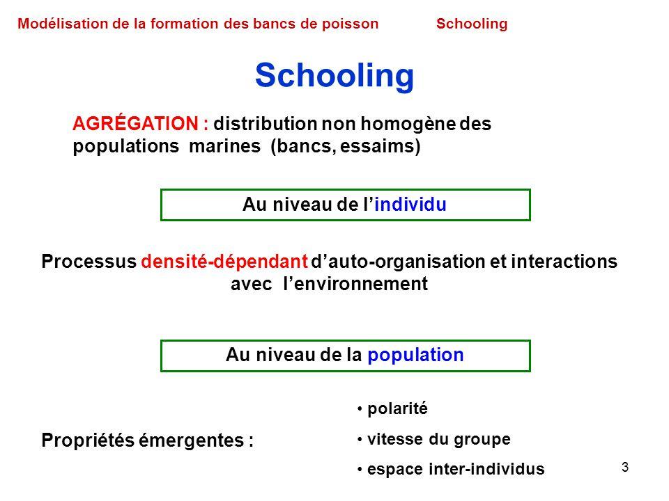 3 Modélisation de la formation des bancs de poissonSchooling AGRÉGATION : distribution non homogène des populations marines (bancs, essaims) Processus
