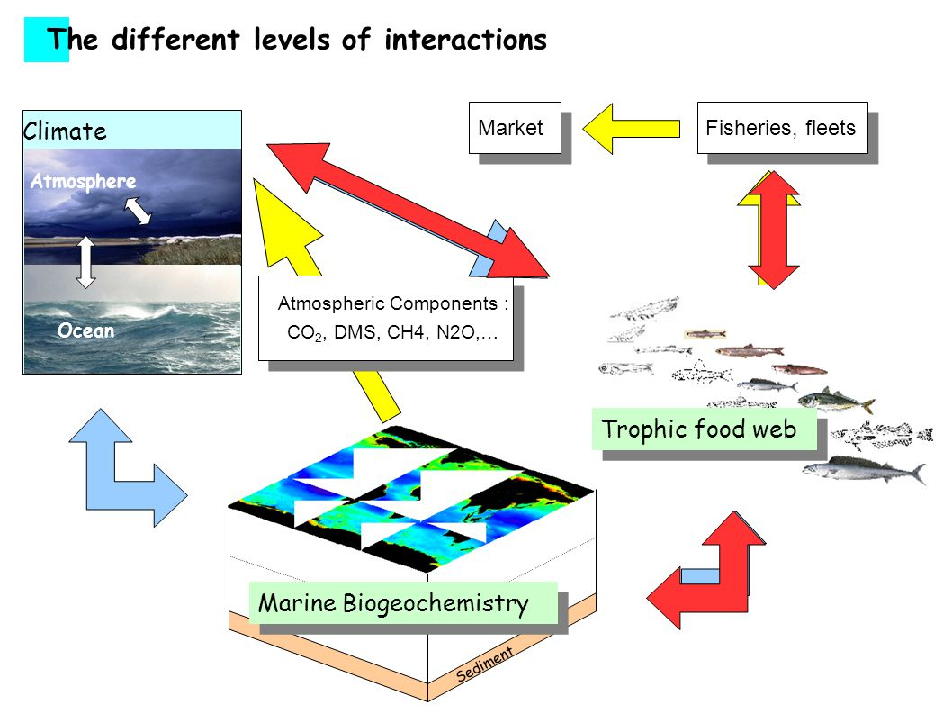 Fisheries The different levels of interactions Sediment Marine Biogeochemistry Ocean Atmosphere Biosphere Soils Climate Atmospheric Components : CO 2, DMS, CH4, N2O,… Market Fisheries, fleets Market Trophic food web