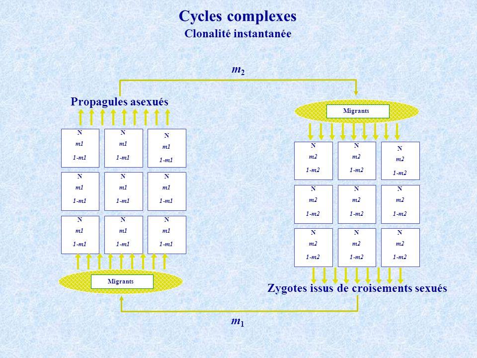 Migrants m1 1-m1 N m1 1-m1 N m1 1-m1 N m1 1-m1 N m1 1-m1 N m1 1-m1 N m1 1-m1 N m1 1-m1 N m1 1-m1 N Migrants m2 1-m2 N m2 1-m2 N m2 1-m2 N m2 1-m2 N m2 1-m2 N m2 1-m2 N m2 1-m2 N m2 1-m2 N m2 1-m2 N Zygotes issus de croisements sexués Propagules asexués m2m2 m1m1 Cycles complexes Clonalité instantanée