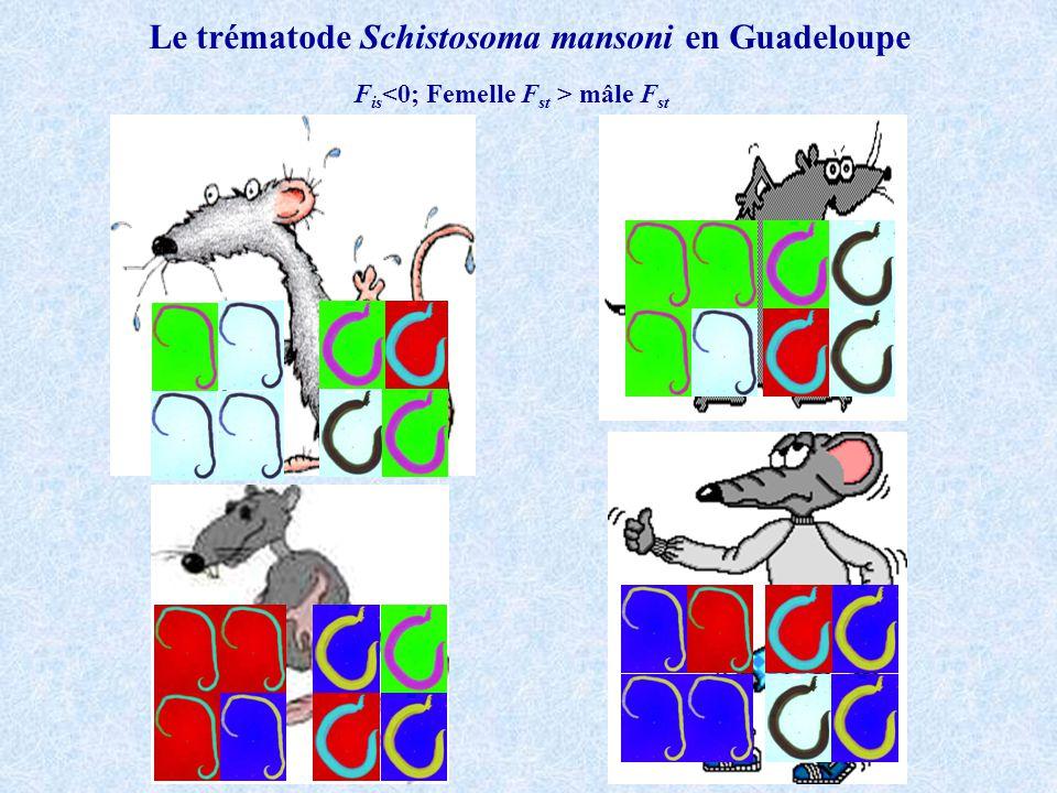 F is mâle F st Le trématode Schistosoma mansoni en Guadeloupe