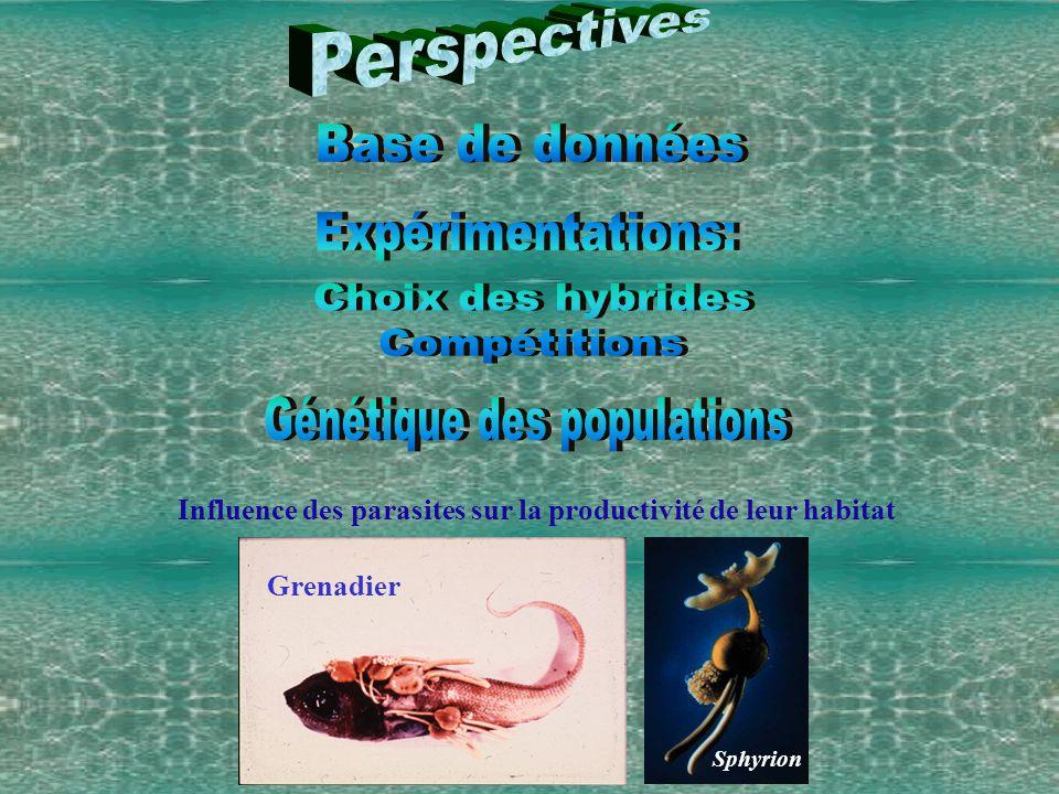 Grenadier Sphyrion Influence des parasites sur la productivité de leur habitat