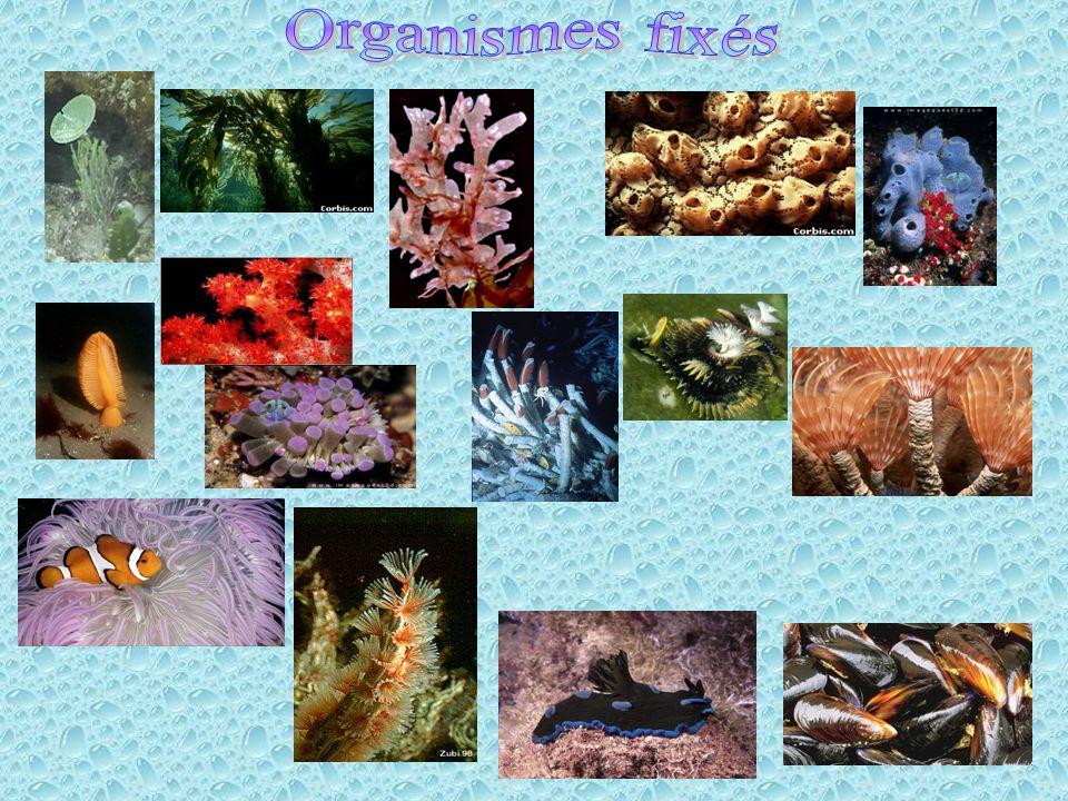N Colonisateurs Environments I (soft régulé)Environment II (hard régulé) cN(1-c)N W1 Habitat 1 W1 NW1+W2 N W2 NW1+W2 N W2 Habitat 2 W1 Habitat 1 c1-c Habitat 2 W2 1-c Habitat 1 W1 c x1-x xN Propagules (1-x)N Propagules W1W2 Regulation N Colonisateurs