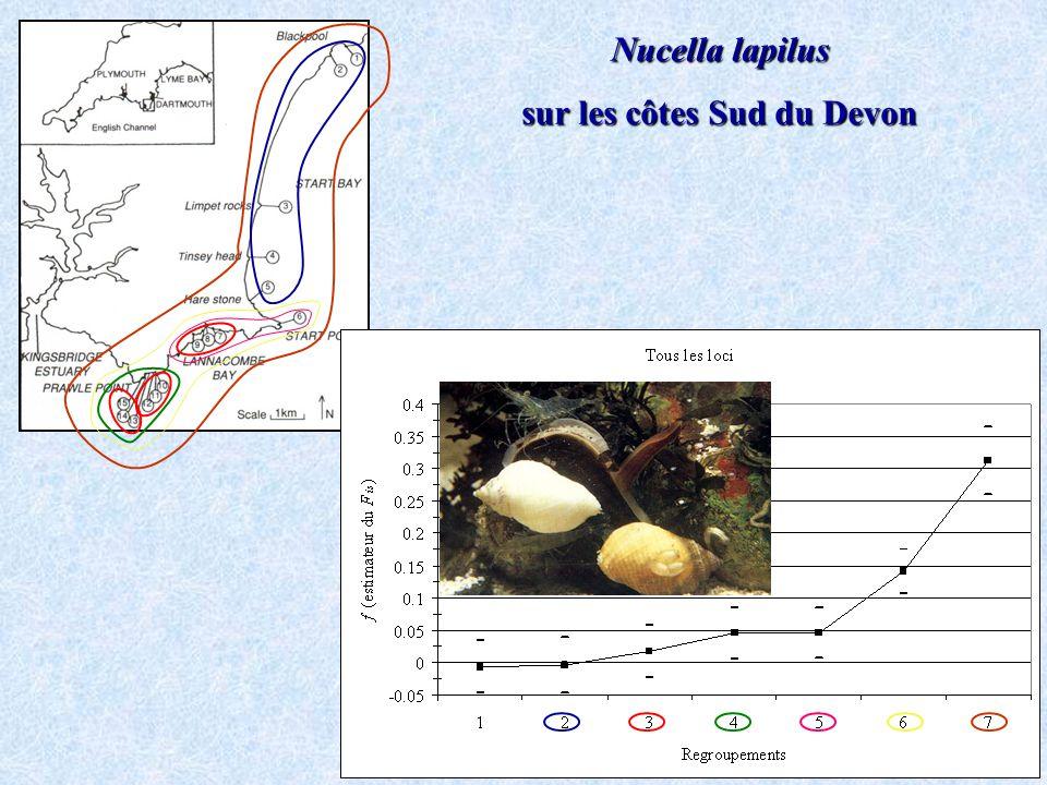 Nucella lapilus sur les côtes Sud du Devon