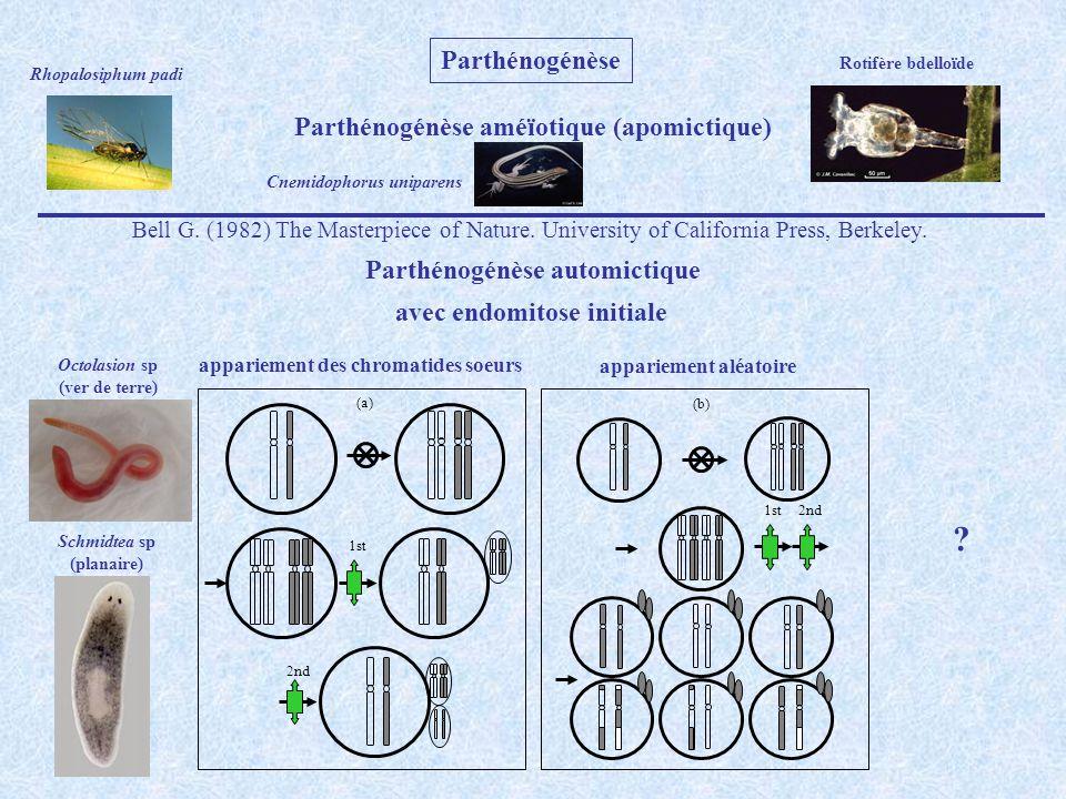 1st 2nd (a) 1st 2nd (b) Parthénogénèse automictique avec suppression d une des deux divisions de la meïose suppression de la 1 ère division suppression de la 2 ème division Psychidae (bag moth) Oribatides Cochenilles Thysanoptères Diptères Hyménoptères Artémies