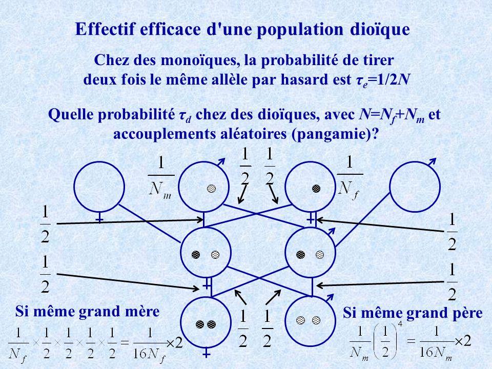 Effectif efficace d'une population dioïque Chez des monoïques, la probabilité de tirer deux fois le même allèle par hasard est τ e =1/2N Quelle probab