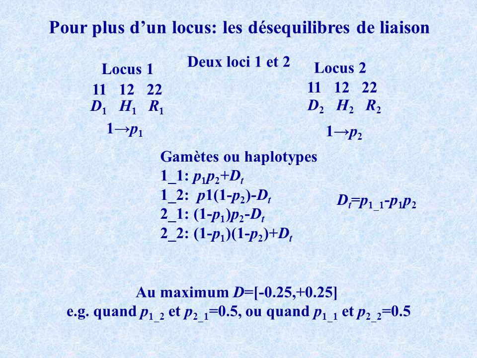 Pour plus dun locus: les désequilibres de liaison Deux loci 1 et 2 11 12 22 Locus 1 Locus 2 D 1 H 1 R 1 D 2 H 2 R 2 1p 1 1p 2 Gamètes ou haplotypes 1_