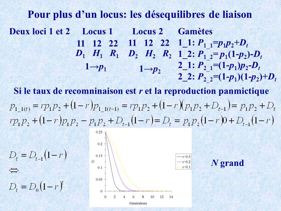 Pour plus dun locus: les désequilibres de liaison Deux loci 1 et 2 11 12 22 Locus 1Locus 2 D 1 H 1 R 1 D 2 H 2 R 2 1p 1 1p 2 Si le taux de recomninais