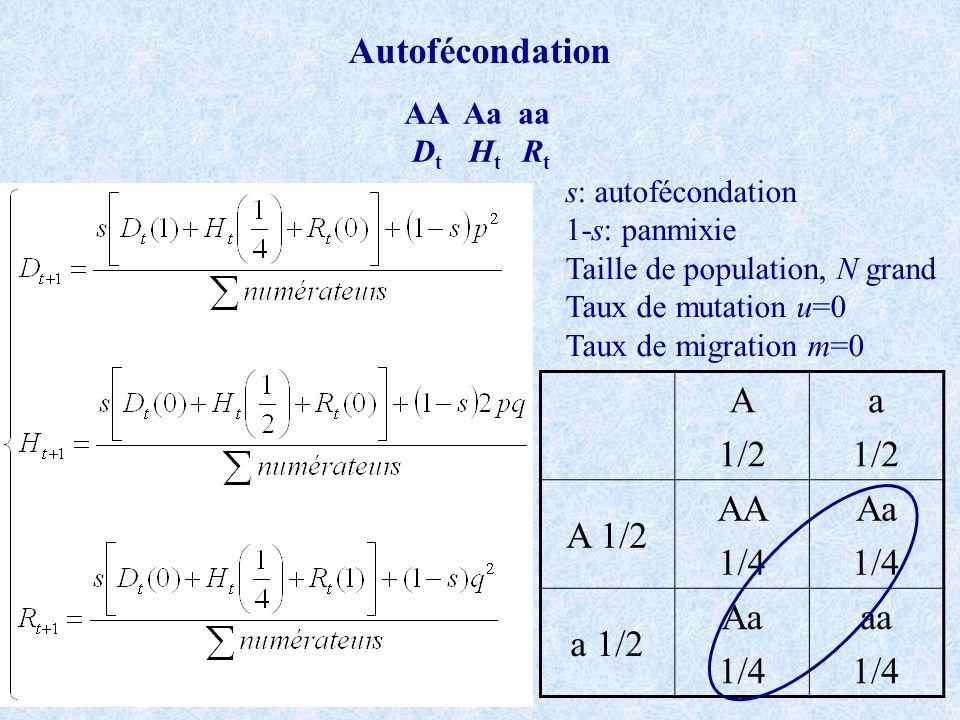 Autofécondation AA Aa aa D t H t R t s: autofécondation 1-s: panmixie Taille de population, N grand Taux de mutation u=0 Taux de migration m=0 A 1/2 a
