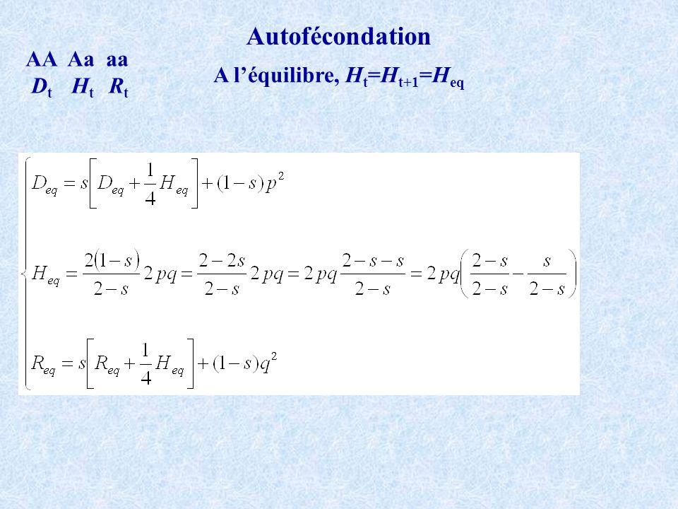 Autofécondation AA Aa aa D t H t R t A léquilibre, H t =H t+1 =H eq