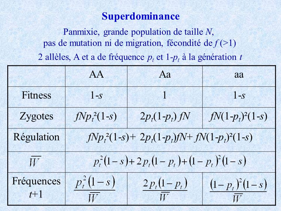 Superdominance AAAaaa Fitness1-s1 ZygotesfNp t ²(1-s)2p t (1-p t ) fNfN(1-p t )²(1-s) RégulationfNp t ²(1-s)+ 2p t (1-p t )fN+ fN(1-p t )²(1-s) Fréque