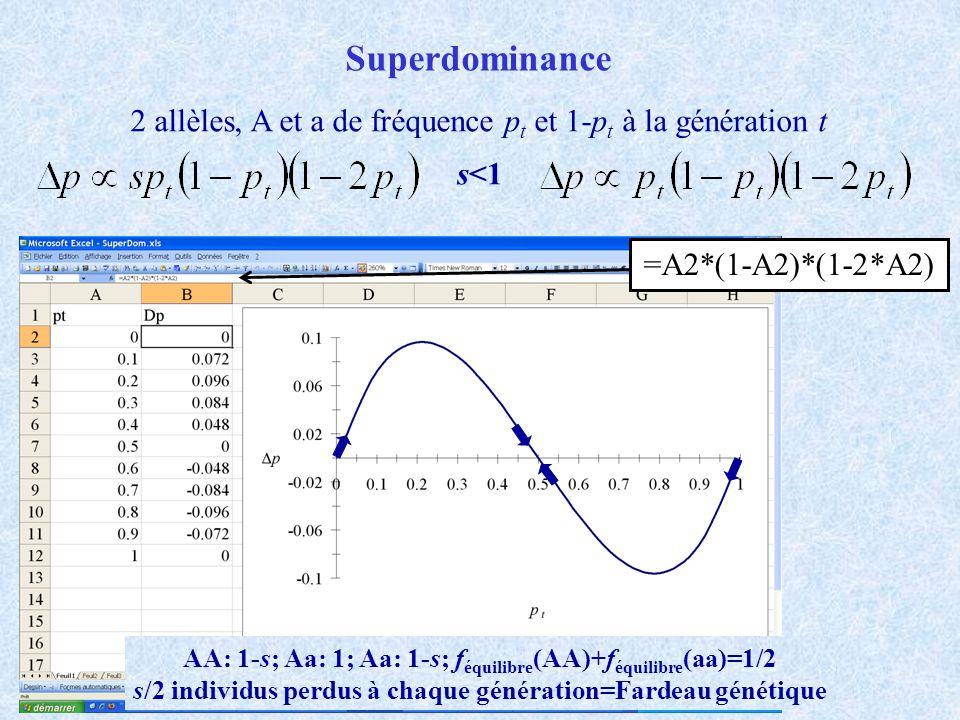 Superdominance 2 allèles, A et a de fréquence p t et 1-p t à la génération t s<1 =A2*(1-A2)*(1-2*A2) AA: 1-s; Aa: 1; Aa: 1-s; f équilibre (AA)+f équil