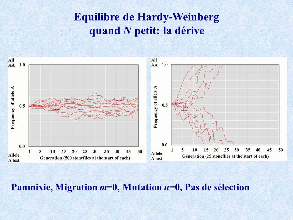 Clonalité Pas de mutation ni de migration, grande population, pas de sélection proportion c investie en reproduction clonale et 1-c en panmixie AA Aa aa D t H t R t A léquilibre H t =H t+1 =H eq et donc: Convergence vers HW mais forts désequilibres de liaison attendus