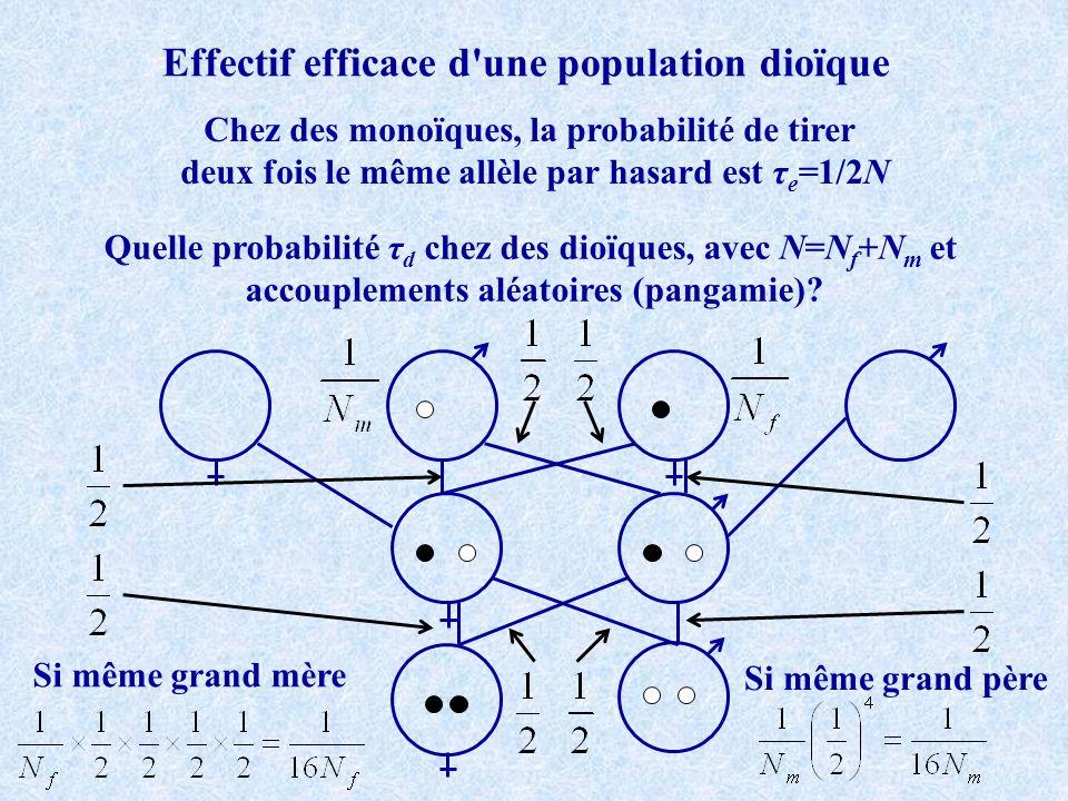 Clonalité +Dérive +Mutation AA Aa aa D t H t R t Aa H o_eq ~1