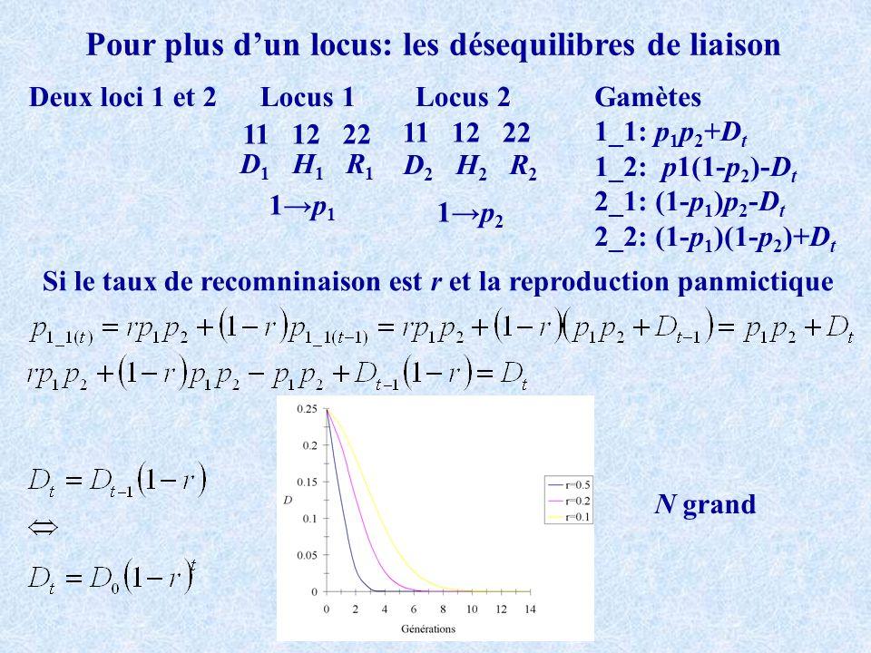 Pour plus dun locus: les désequilibres de liaison Deux loci 1 et 2 11 12 22 Locus 1Locus 2 D 1 H 1 R 1 D 2 H 2 R 2 1p 1 1p 2 Gamètes 1_1: p 1 p 2 +D t 1_2: p1(1-p 2 )-D t 2_1: (1-p 1 )p 2 -D t 2_2: (1-p 1 )(1-p 2 )+D t Si le taux de recomninaison est r et la reproduction panmictique N grand