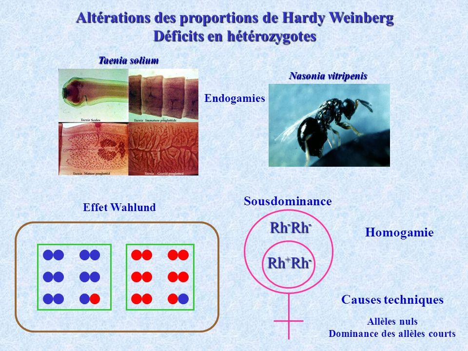 Altérations des proportions de Hardy Weinberg Déficits en hétérozygotes Effet Wahlund Taenia solium Nasonia vitripenis Endogamies Rh - Rh - Rh + Rh - Sousdominance Causes techniques Allèles nuls Dominance des allèles courts Homogamie