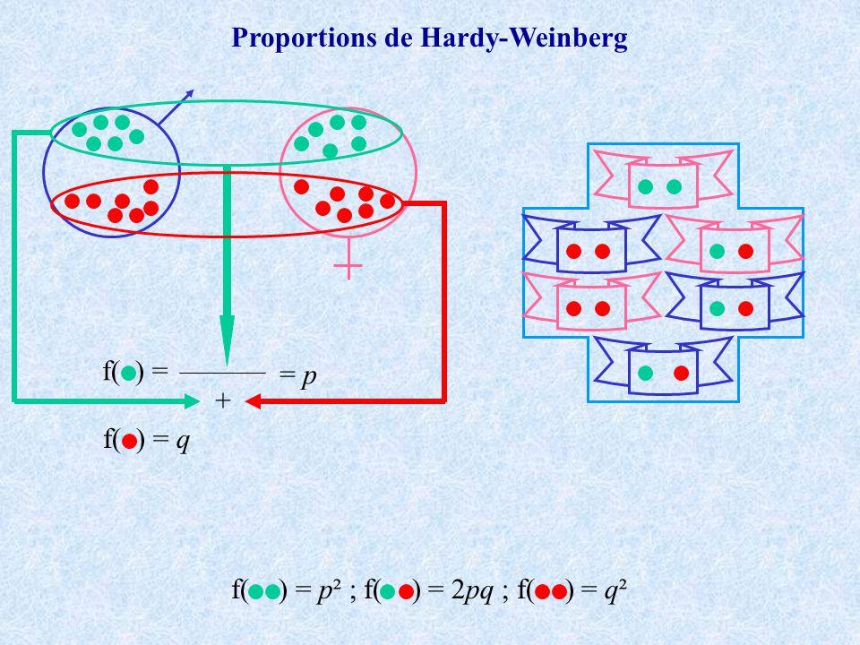 f( ) = + = p f( ) = q Proportions de Hardy-Weinberg f( ) = p² ; f( ) = 2pq ; f( ) = q²