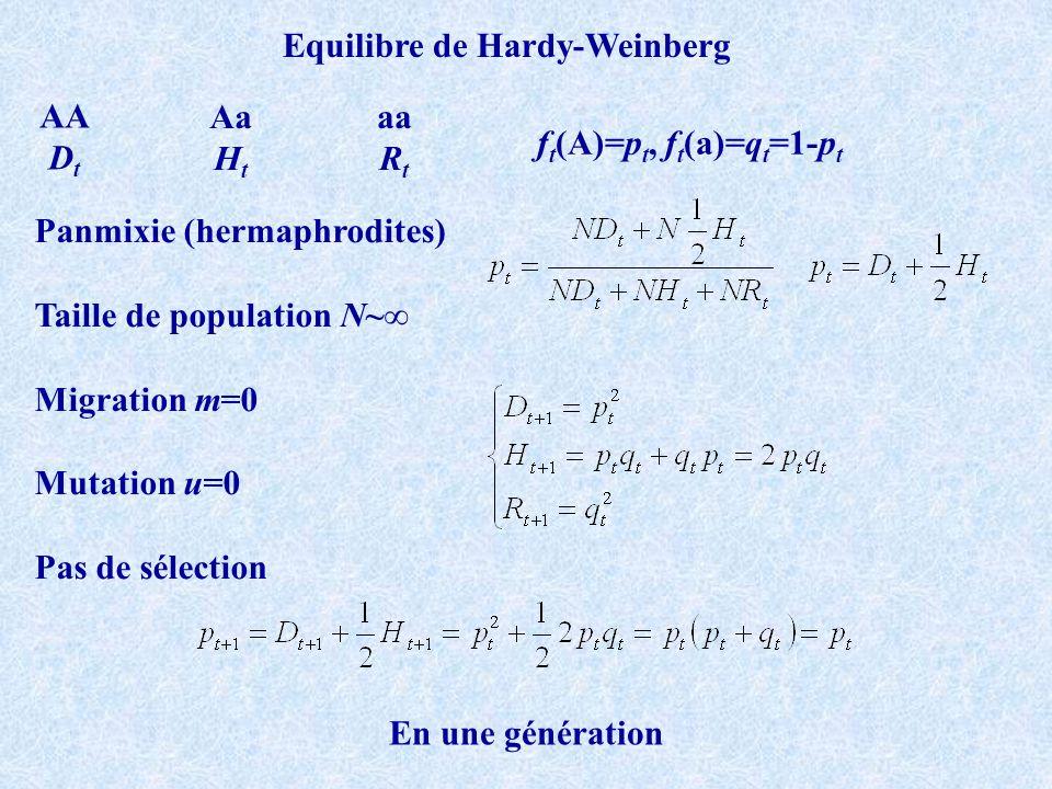 Aa H t aa R t AA D t f t (A)=p t, f t (a)=q t =1-p t Equilibre de Hardy-Weinberg Panmixie (hermaphrodites) Taille de population N~ Migration m=0 Mutation u=0 Pas de sélection En une génération