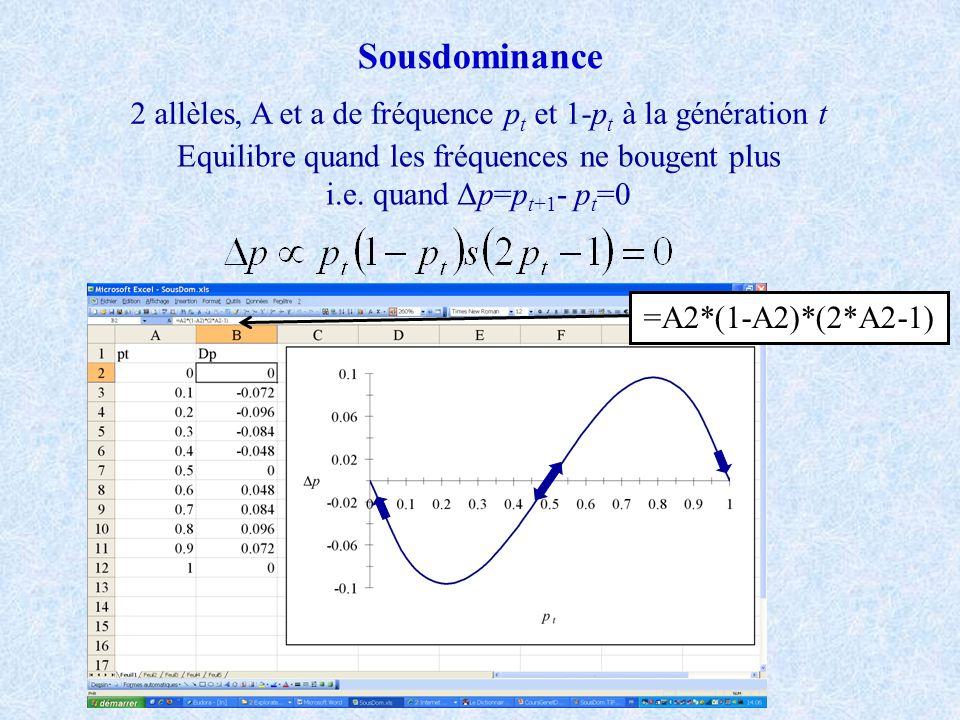 Sousdominance 2 allèles, A et a de fréquence p t et 1-p t à la génération t Equilibre quand les fréquences ne bougent plus i.e.