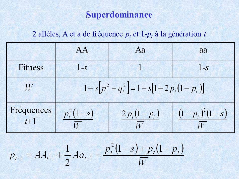 Superdominance AAAaaa Fitness1-s1 Fréquences t+1 2 allèles, A et a de fréquence p t et 1-p t à la génération t