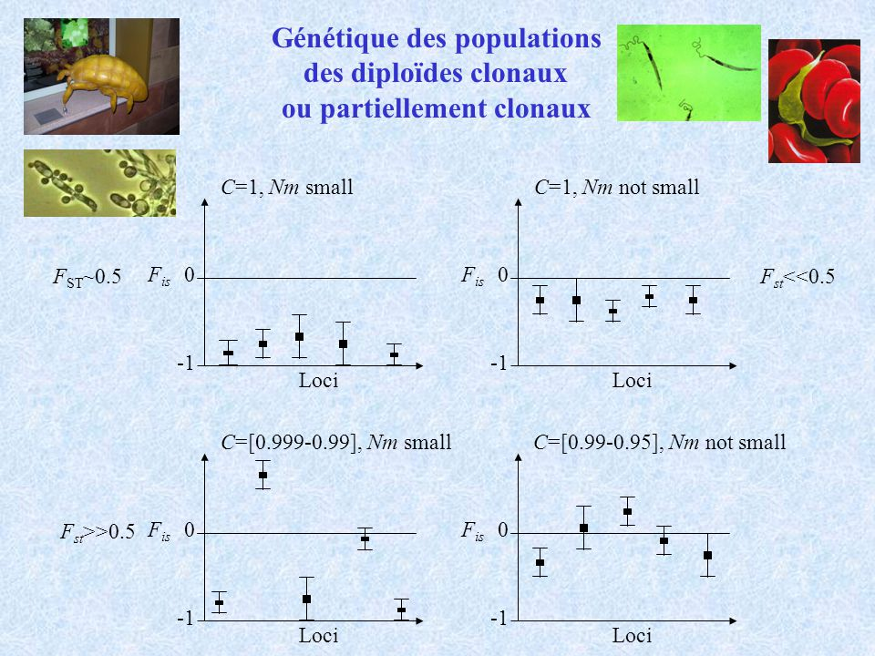 Génétique des populations des diploïdes clonaux ou partiellement clonaux F is 0 Loci C=[0.99-0.95], Nm not small F is 0 Loci C=1, Nm small F ST ~0.5 F