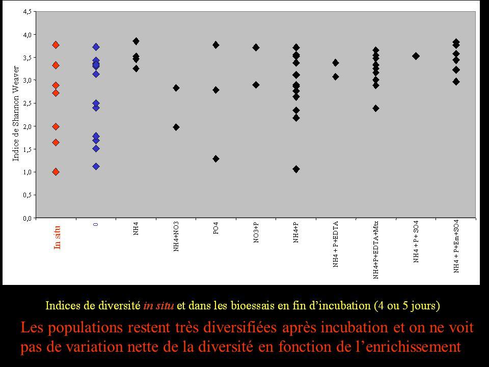 Les populations restent très diversifiées après incubation et on ne voit pas de variation nette de la diversité en fonction de lenrichissement