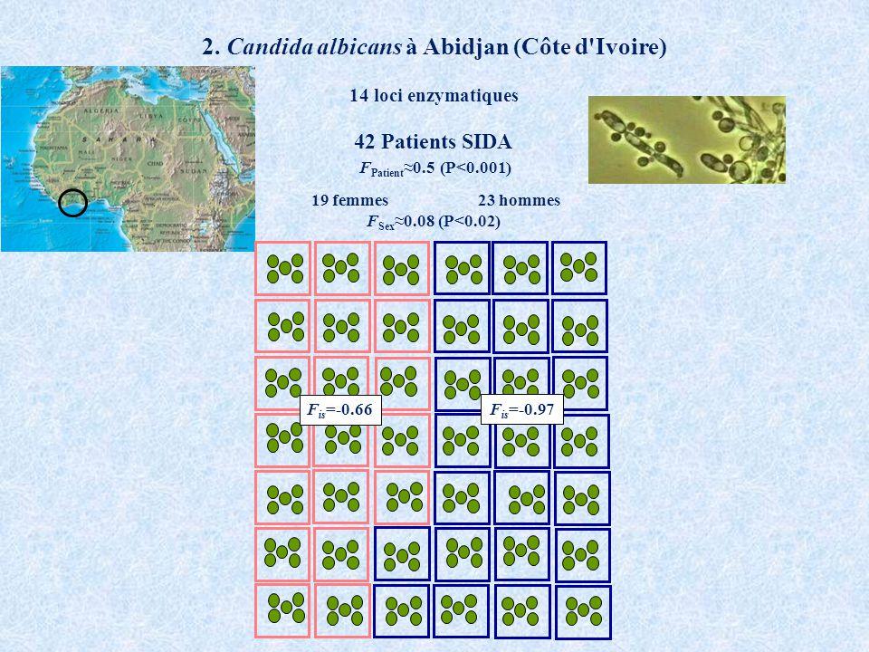 2. Candida albicans à Abidjan (Côte d'Ivoire) 42 Patients SIDA 19 femmes 23 hommes F Patient 0.5 (P<0.001) F Sex 0.08 (P<0.02) 14 loci enzymatiques F