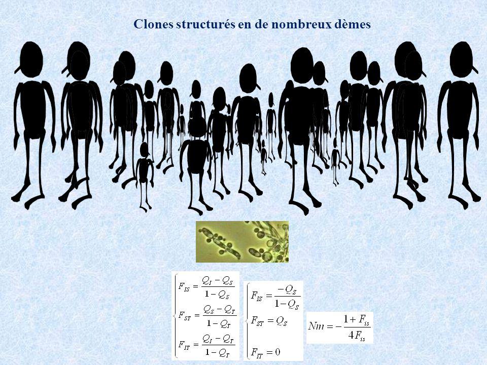 Clones structurés en de nombreux dèmes